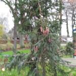 151212 een boom